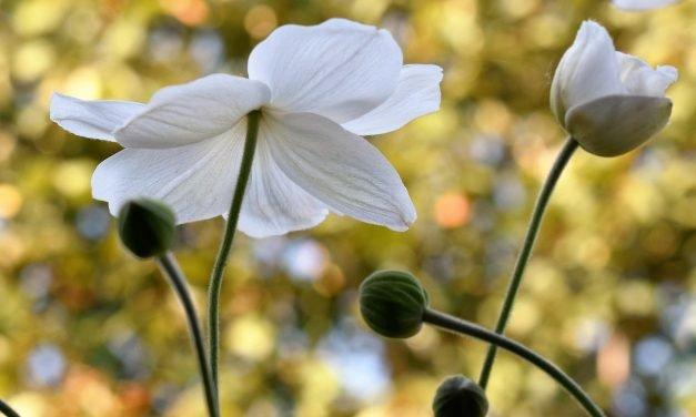 Tuinieren op kleur: Wit