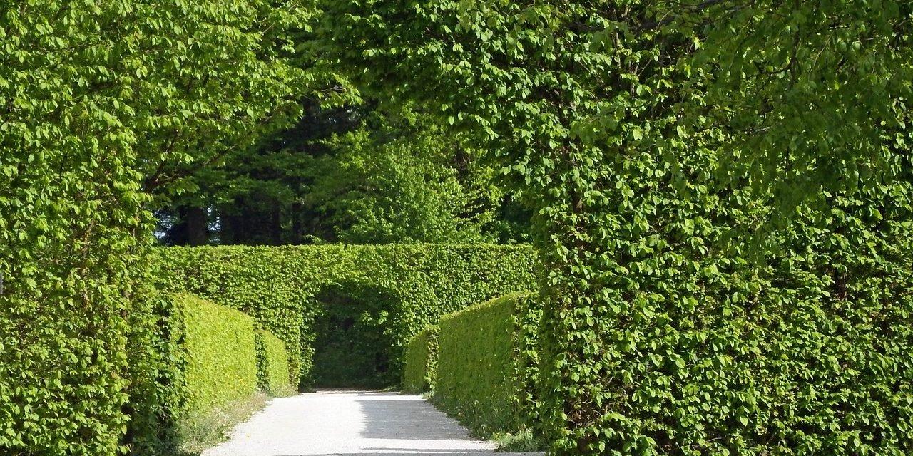 Maart: Tuinbeurzen en speciale tuindagen
