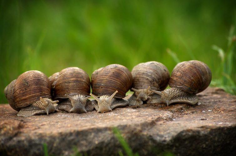 slakken bestrijden1