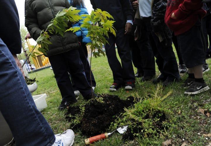 boom verplanten