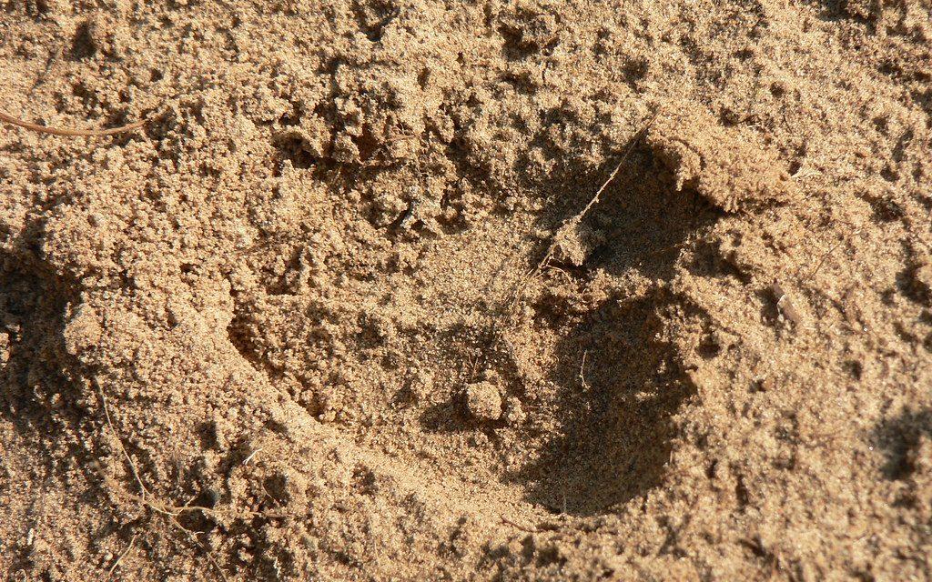 Tuinieren op zandgrond | alles over zandgrond verbeteren
