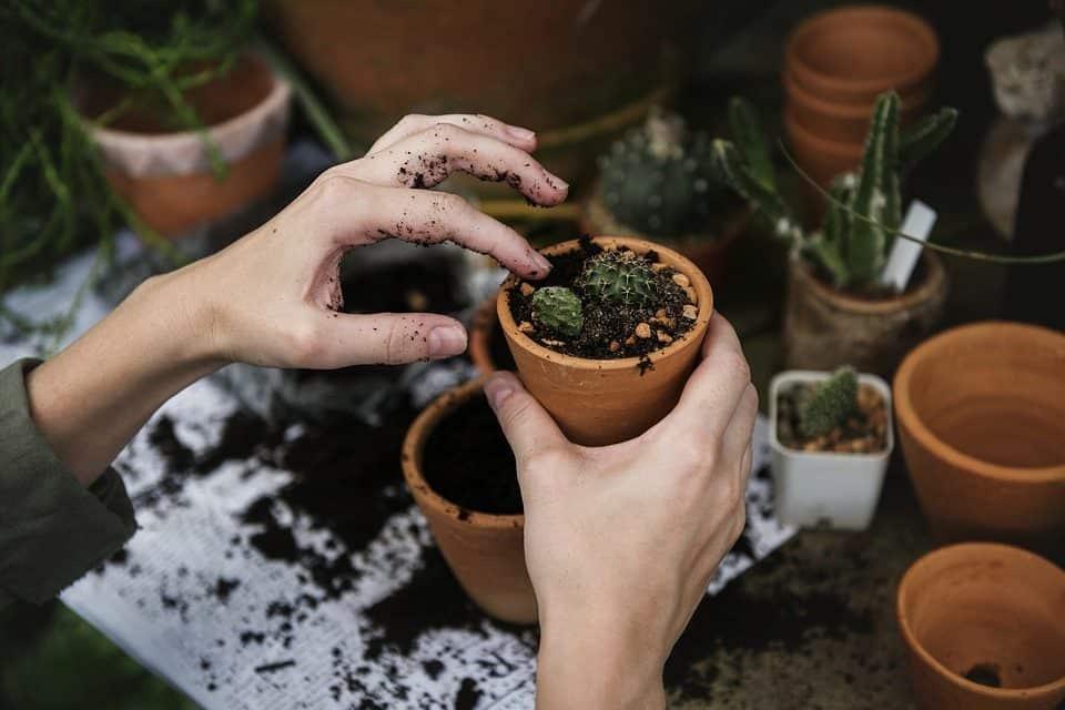 Verjongen  en/of vermeerderen van vaste planten