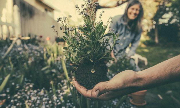 Snoeien en tuinieren rond de langste dag