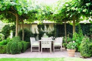 Een boom kiezen voor in je tuin let hier op voordat je koopt huisentuinmagazine for Schaduw een terras