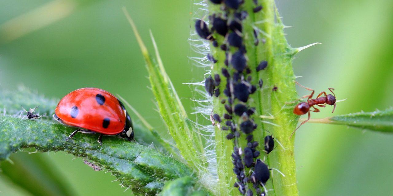 10 tips om bladluizen te bestrijden in uw planten