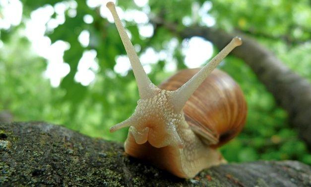 Slakken bestrijden, zo creëer je een slakkenvrije tuin!
