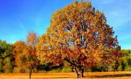 Een boom kiezen voor in je tuin, let hier op voordat je koopt!