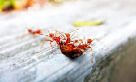 Mieren bestrijden, zo voorkom je een mierenplaag!