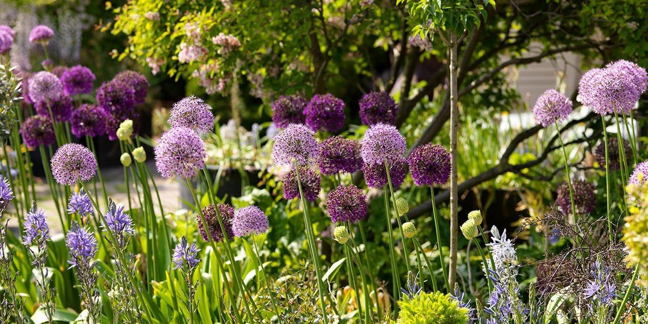 Tuinonderhoud voor een gezonde tuin