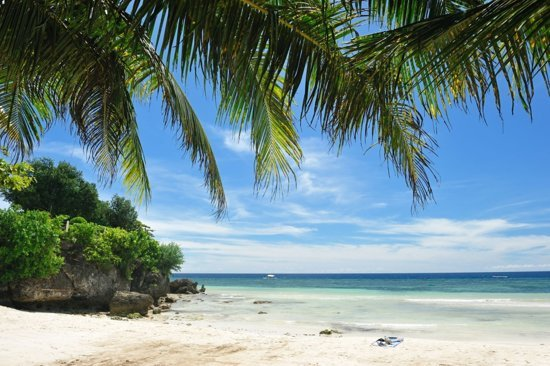 Tuinposter - Palmbladeren en strand