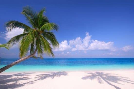 Tuinposter - Palmboom en strand
