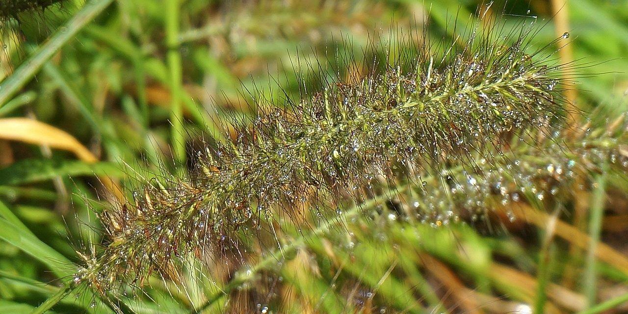 20 voorbeelden van een tuin met siergrassen