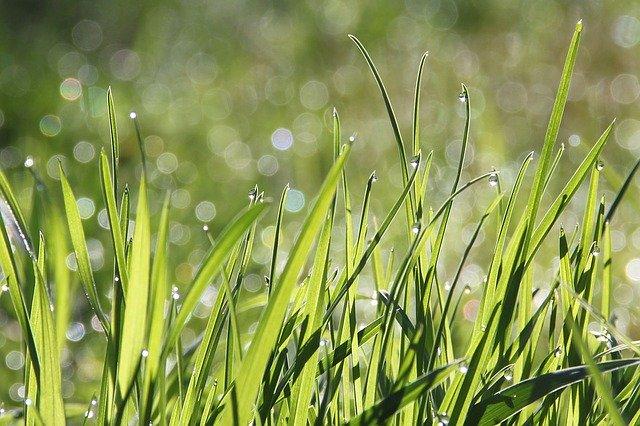 Gras leggen op wit zand, kan dat?
