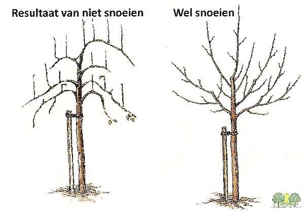 Bron: de Fruithof / fruitpluktuin.nl
