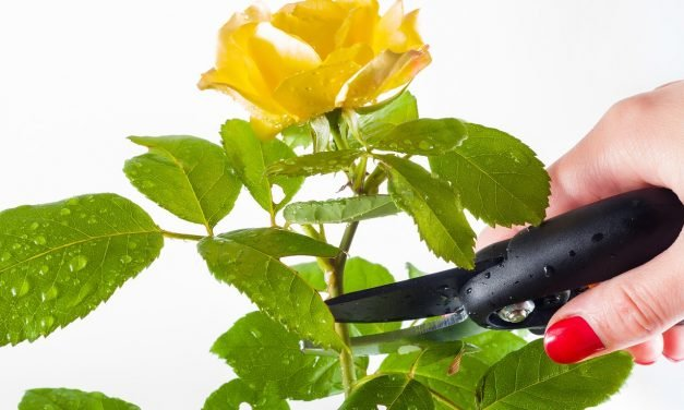 Het snoeien van planten en heesters