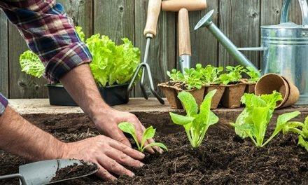 Moestuinbakken, zelf je groenten verbouwen in bakken of potten