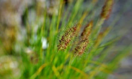 De top 10 mooiste siergrassen voor in je tuin + foto's