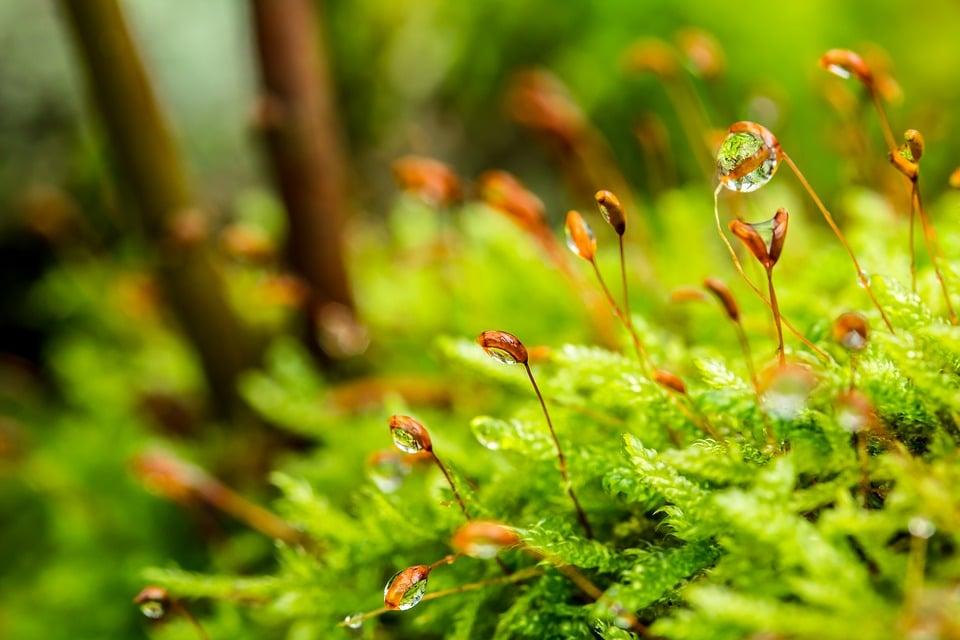 6 planten die de luchtvochtigheid in huis verhogen