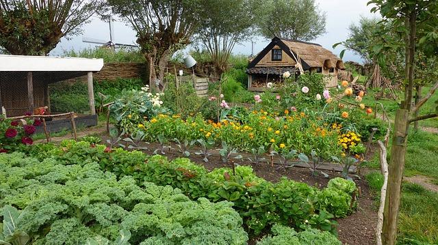 Deze groenten groenten kun je in de winter zaaien en kweken