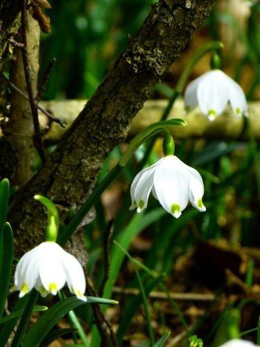 tuinieren wit