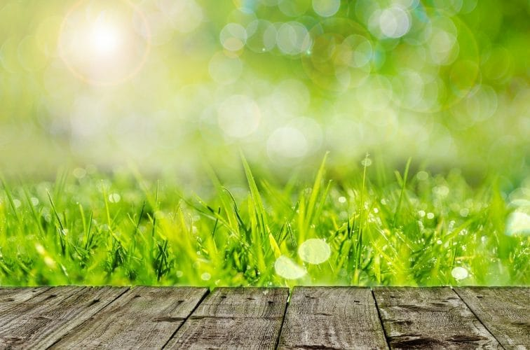 Gras maaien is belangrijk. Want te lang gras krijgt slappe wortels, te weinig zonlicht en ziet er simpelweg niet mooi uit.