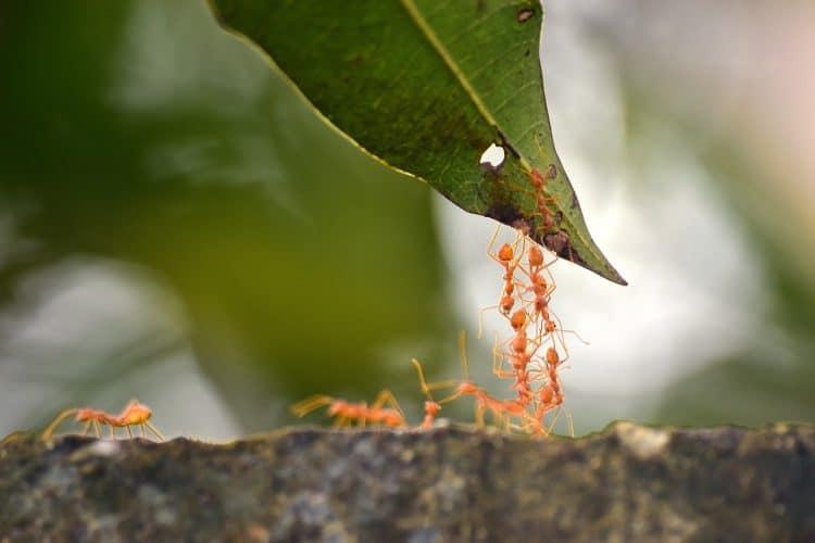 Mieren nemen altijd dezelfde route.