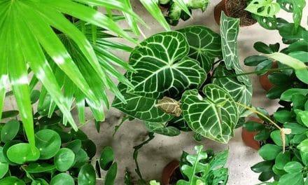 Welke kamerplanten passen bij jou?