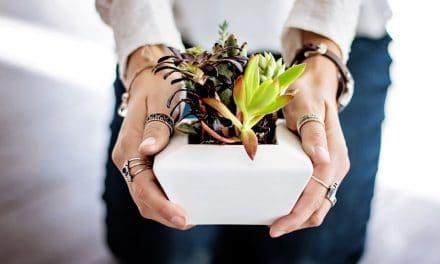 Vetplanten stekken, hoe en wanneer doe je dat?