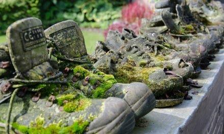Waarom veiligheidsschoenen of werkschoenen ook in de tuin belangrijk zijn