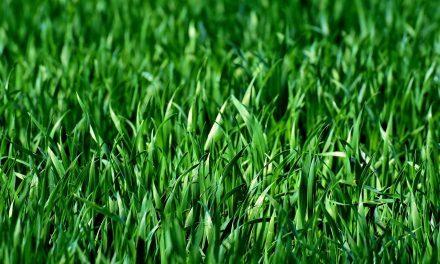 Gras voor het balkon