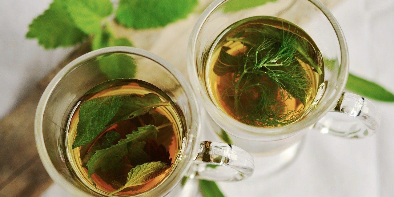 10 bekendste medicinale en geneeskrachtige planten